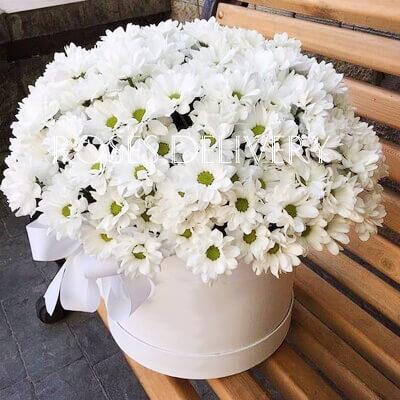 Коробка 15 «Белых Хризантем» White