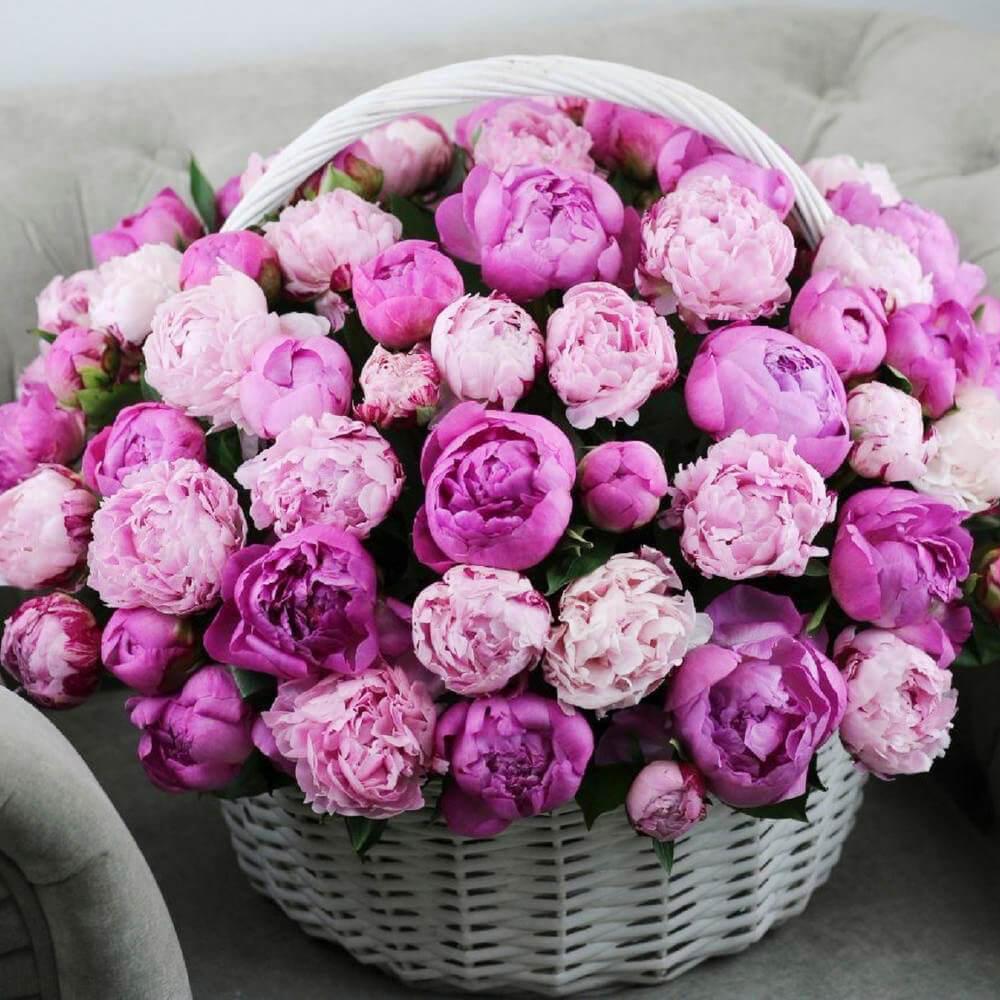 Букет 101 пион микс розовый и малиновый