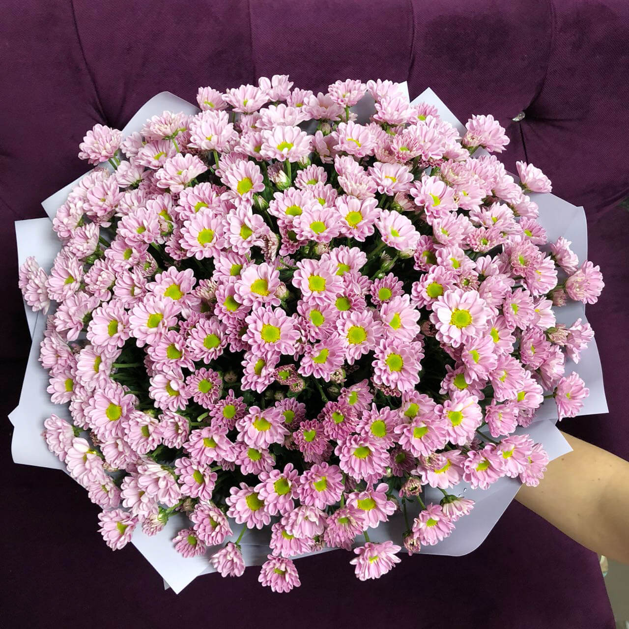 Букет 35 «Розовых Хризантем» Blue 60см