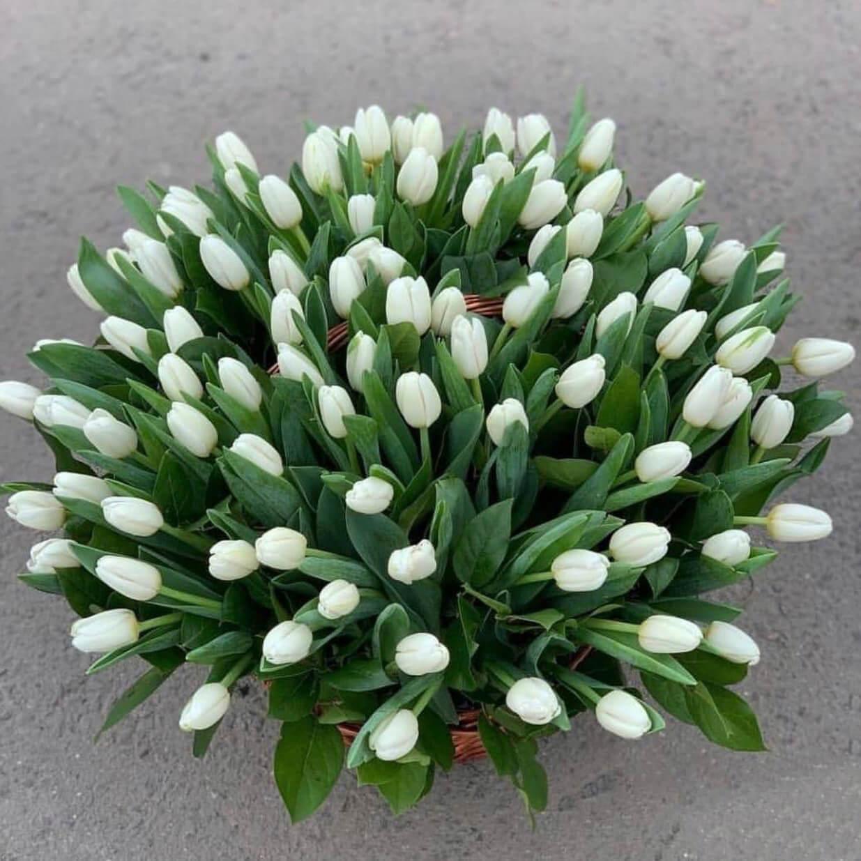 Корзина 151 «Белый Тюльпан»