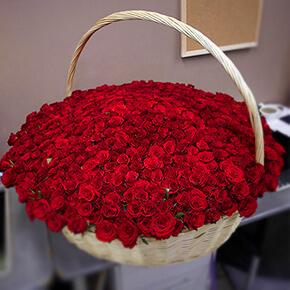 Корзина 501 «Ред Наоми Хендел»