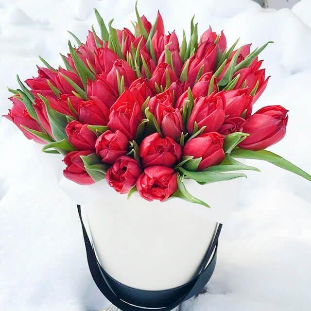 Коробка 49 «Красных Тюльпанов» White
