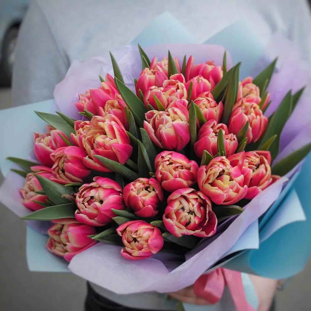 Тюльпаны Колумбус
