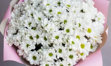 Букет 25 «Белых Хризантем» Pink 60см