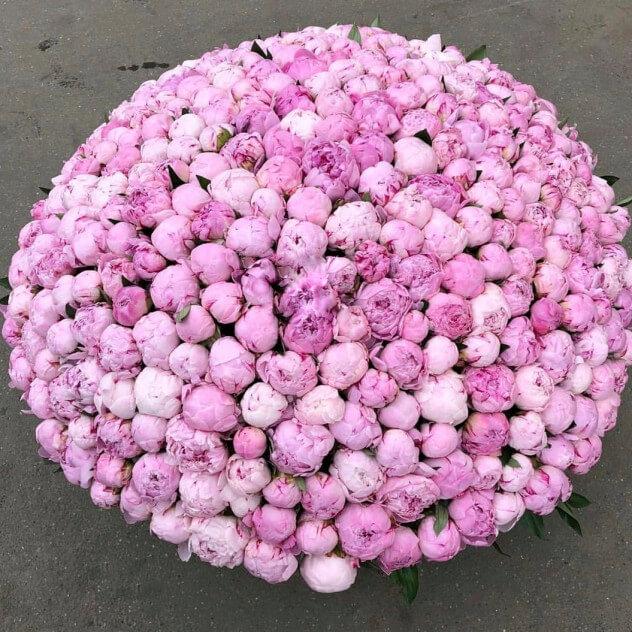 Корзина из 501 розового пиона